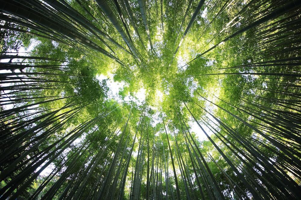 Nachhaltige Forstwirtschaft - CupPrint ist stolz auf die PEFC-Zertifizierung
